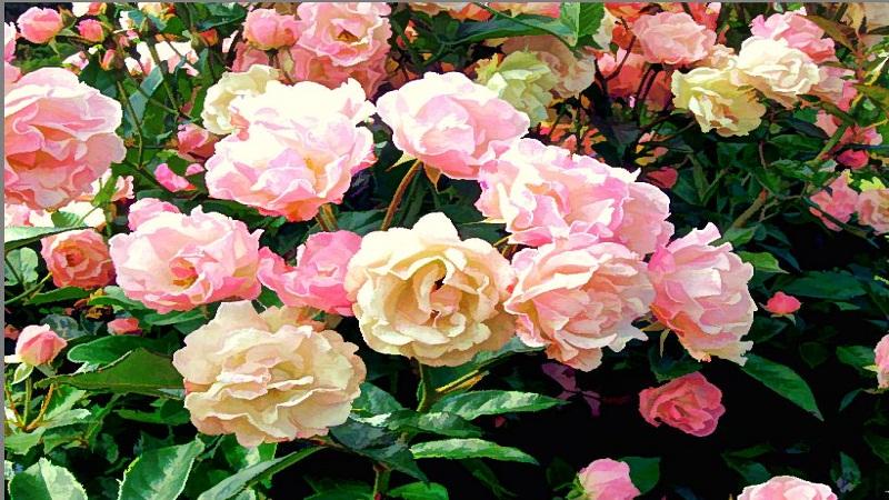 floral prints